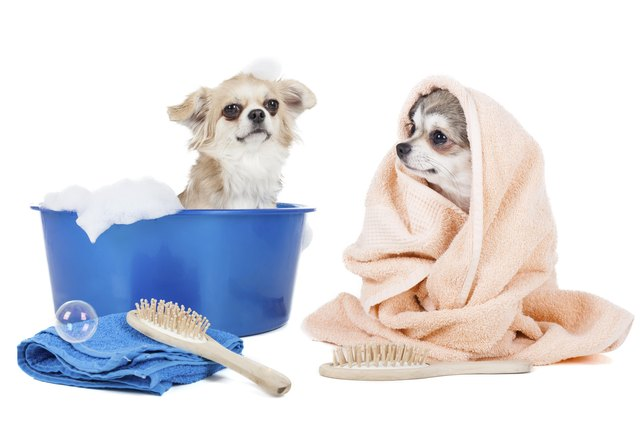 homemade dog conditioner cuteness