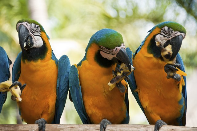 What Kinds of Fruit Can Parrots and Macaws Have? | Cuteness
