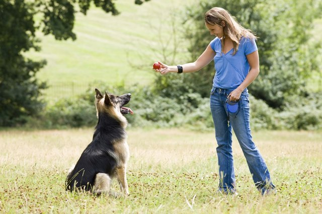 Training Your Dog To Attack Intruders