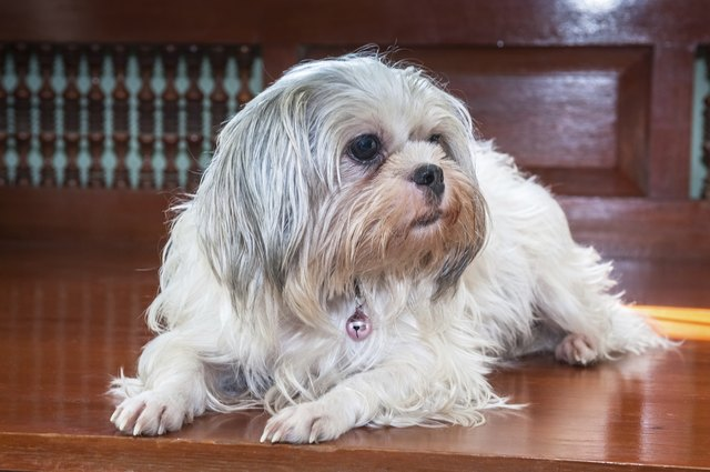 Dog Breeds That Can Be Left Alone For  Hours