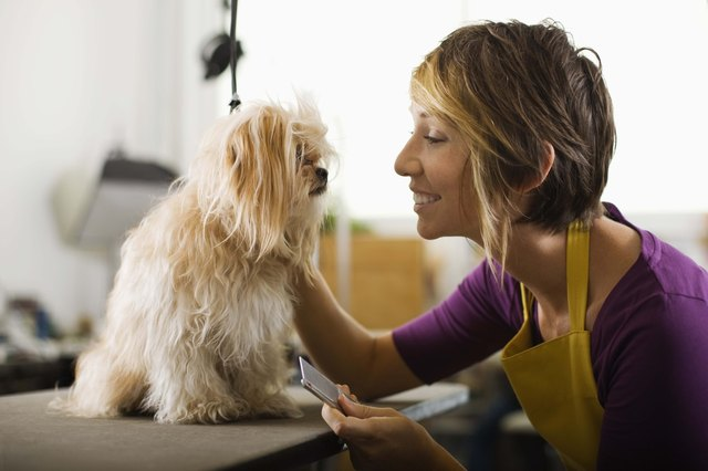 Sedating your dog for grooming
