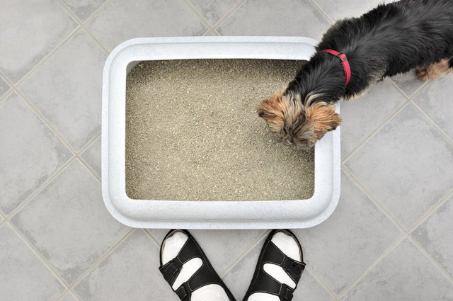 How To Stop Dog From Eating Poop Outside