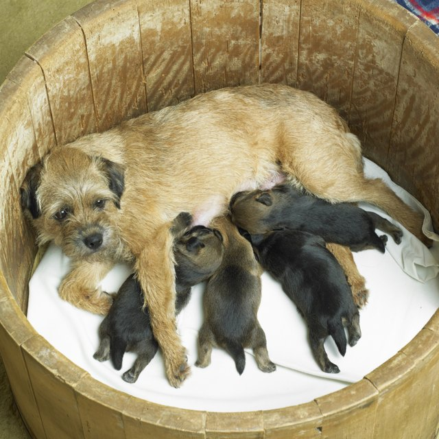 What To Feed A Nursing Mother Dog Cuteness