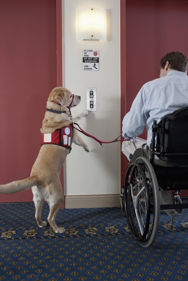 What Does Service Dogs For The Hearing Impaired Do