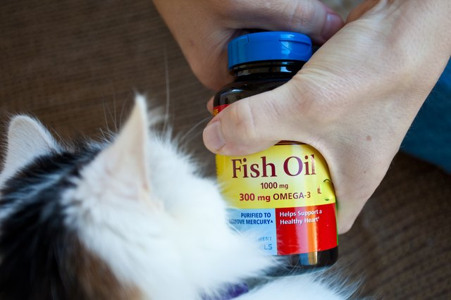 Good Dry Cat Food That Isn T Expensive
