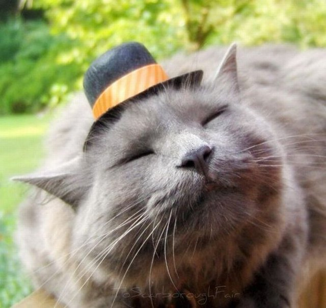 7c6a921b176 Just 21 Adorable Animals Wearing Cute Hats