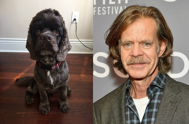 Dog looks like actor William H. Macy