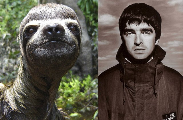 Sloth looks like musician Noel Gallagher