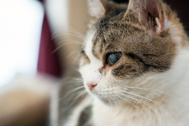 Natural Remedy For A Cat With A Cold In The Eye Cuteness