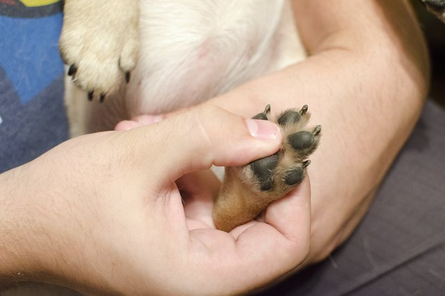 What Are The Treatments For A Cut On A Dog S Paw Pad