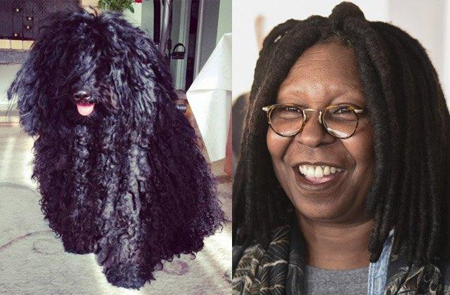 Puli dog looks like actress Whoopi Goldberg