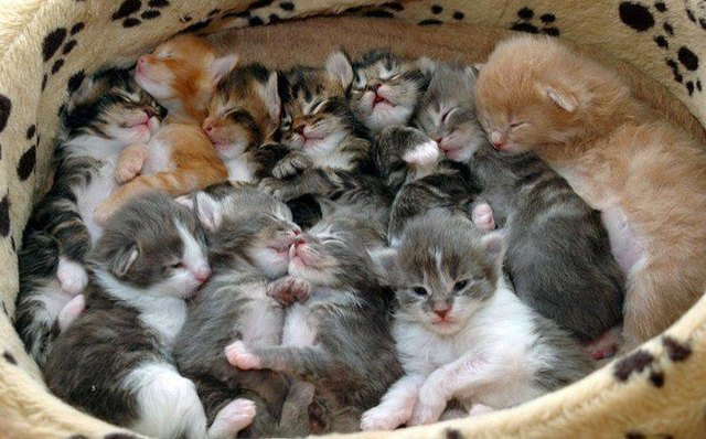 These 21 Napping Kittens Are The Moment Of Self Care You Need