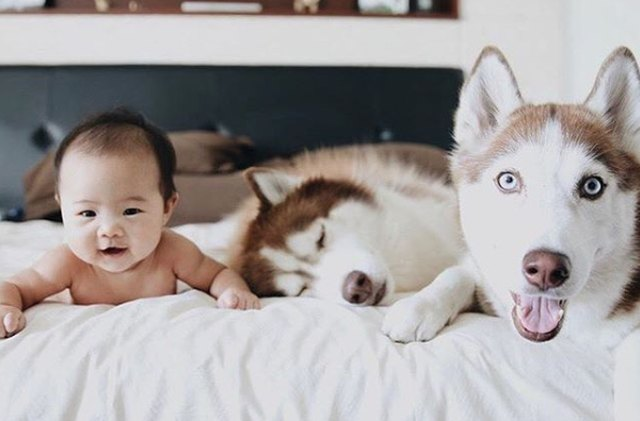 104 Superb Names For Husky Dogs Cuteness