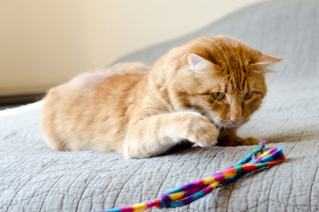 Top 5 Ways Your Cat Loves to Play