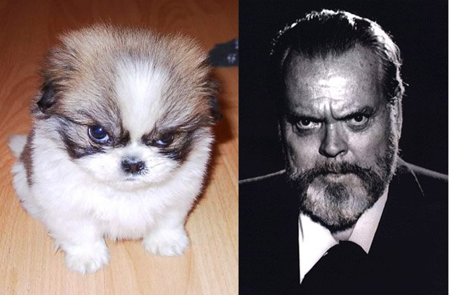 Angry puppy looks like director Orson Welles