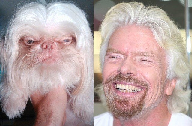 Dog looks like billionaire Richard Branson