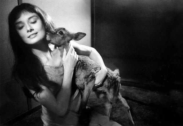 Audrey Hepburn and her pet deer