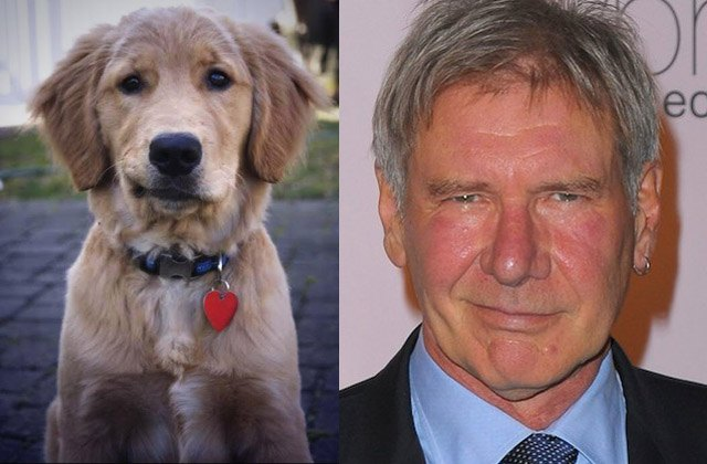 Dog smirks just like actor Harrison Ford