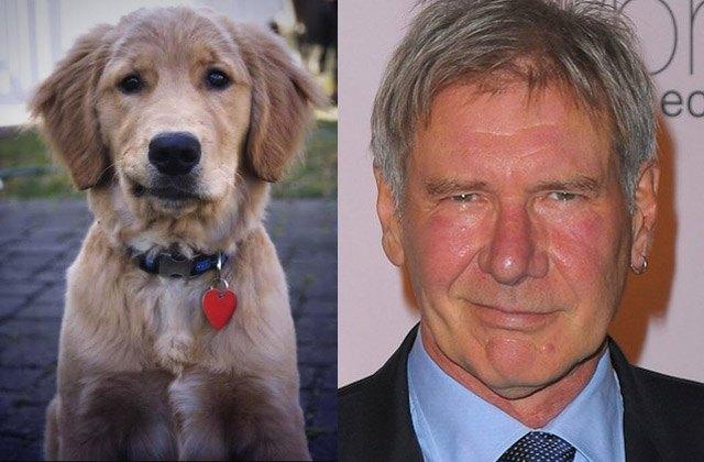 Dog smirks just like actor Harrison Ford