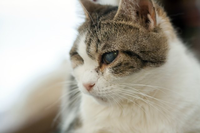 Home Remedy Eye Wash For Cats