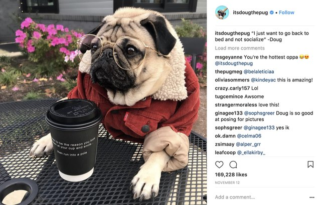 These Are Instagram's Most-Followed Pets of 2017