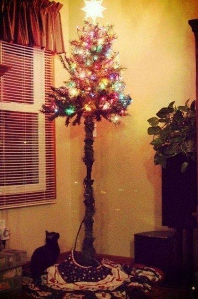 Wreck the Halls: 12 Pictures of Cats Destroying Christmas ...
