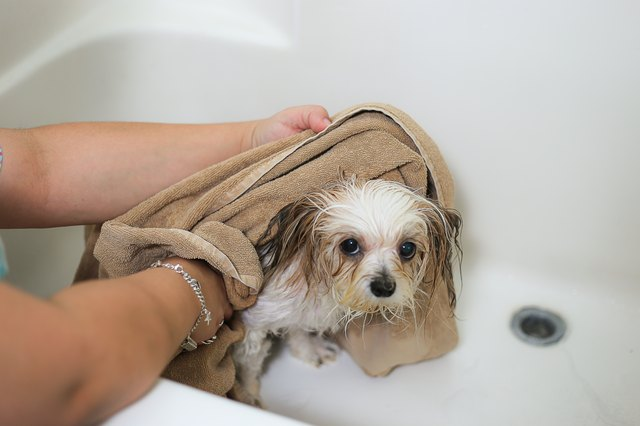 how to kill fleas instantly on a dog cuteness