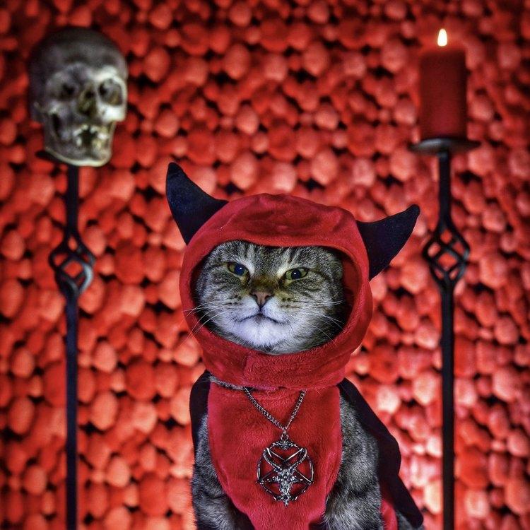 Paul Koudounaris / Cat Art Show