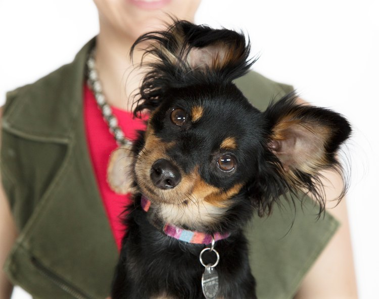 How does pet health insurance work?