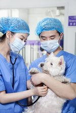 What Is Panalog Ointment Used for in Dogs?