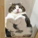 25 Cats Who Are Even Cuter When They're Smooshed Across Glass Tables