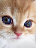 People Are Sharing Closeups Of Their Cats' Eyes And We Can't Stop Staring
