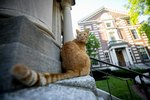 Meet Remy, Harvard's Resident Big Cat on Campus