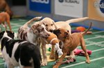 Meet Some Of The Good Boys & Girls Who Will Be Facing off in Puppy Bowl XV