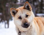 110 Alaskan Dog Names