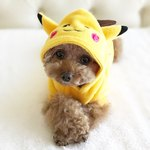 128 Pokémon Names For Dogs