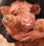 19 Adorable Farm Animals That Will Make You Wish You Lived on a Farm