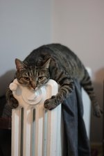 19 Heat-Seeking Devices Disguised as Cats