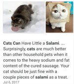 Can Cats Really Have a Little Salami, As a Treat?
