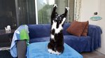 17 Cats Just Being Adorable Weirdos