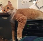 21 Cats Who Have a Love/Hate Relationship With Printers