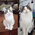 18 Little Fluffs Who Became Majestic Floofs