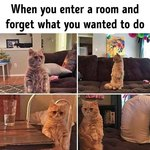19 Super Relatable Cat Memes