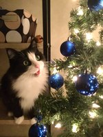 22 Cats Who Are Definitely Going To Destroy That Christmas Tree