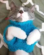 18 Adorable Cats in Sweaters