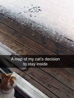 Just 22 Cats Reacting to Snow