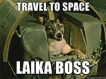 144 Space Names For Dogs