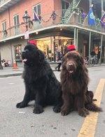 136 Cajun Dog Names