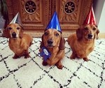 20 Dogs (And 1 Cat) Rocking Sweet As Heck Party Hats