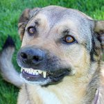 """People Are Posting """"Unflattering"""" Pictures Of Their Dogs & We Can't Stop Laughing"""